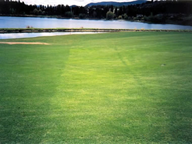 Shannon Lake Golf Course after Natures Gold Fertilization